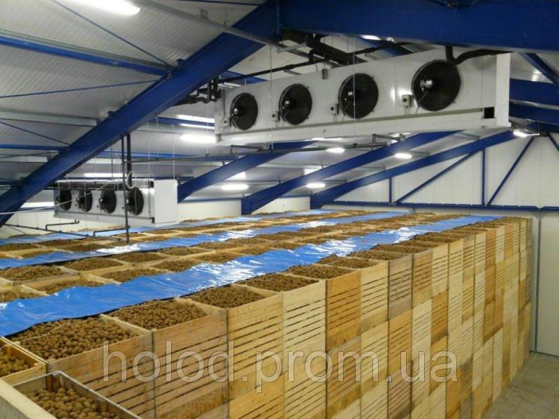 Холодильная камера для хранения картофеля (картофелехранилище)