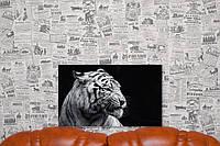 Фото на холсте Тигр 50х30 см.