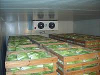 Холодильная камера для хранения капусты