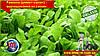 Руккола (рокет-салат) - выращивание из семян.