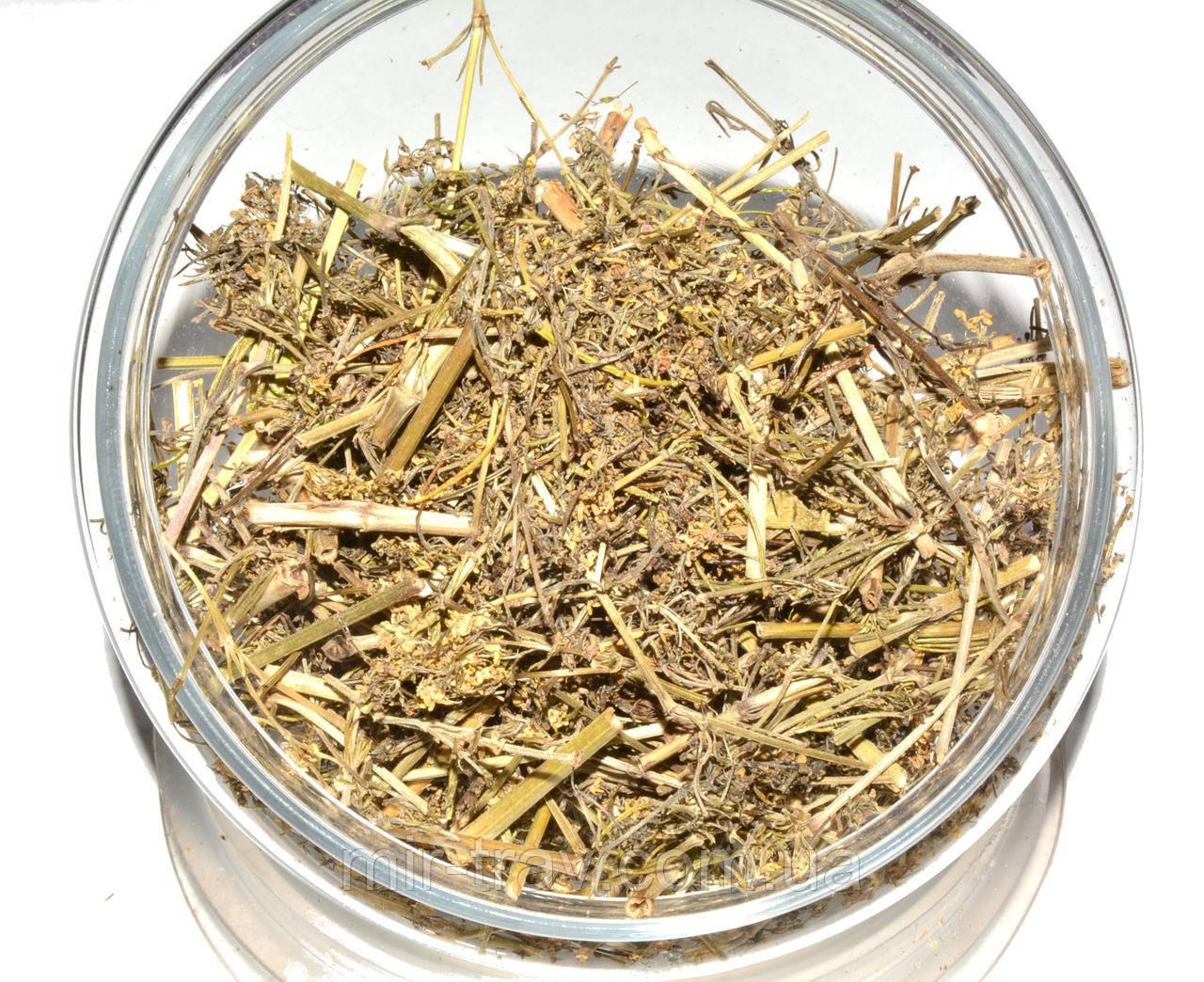 Подмаренник настоящий трава (подмаренник желтый)