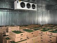 Холодильная камера для овощей. Вентиляция овощехранилища.