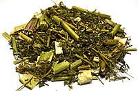 Болиголов пятнистый трава, фото 1