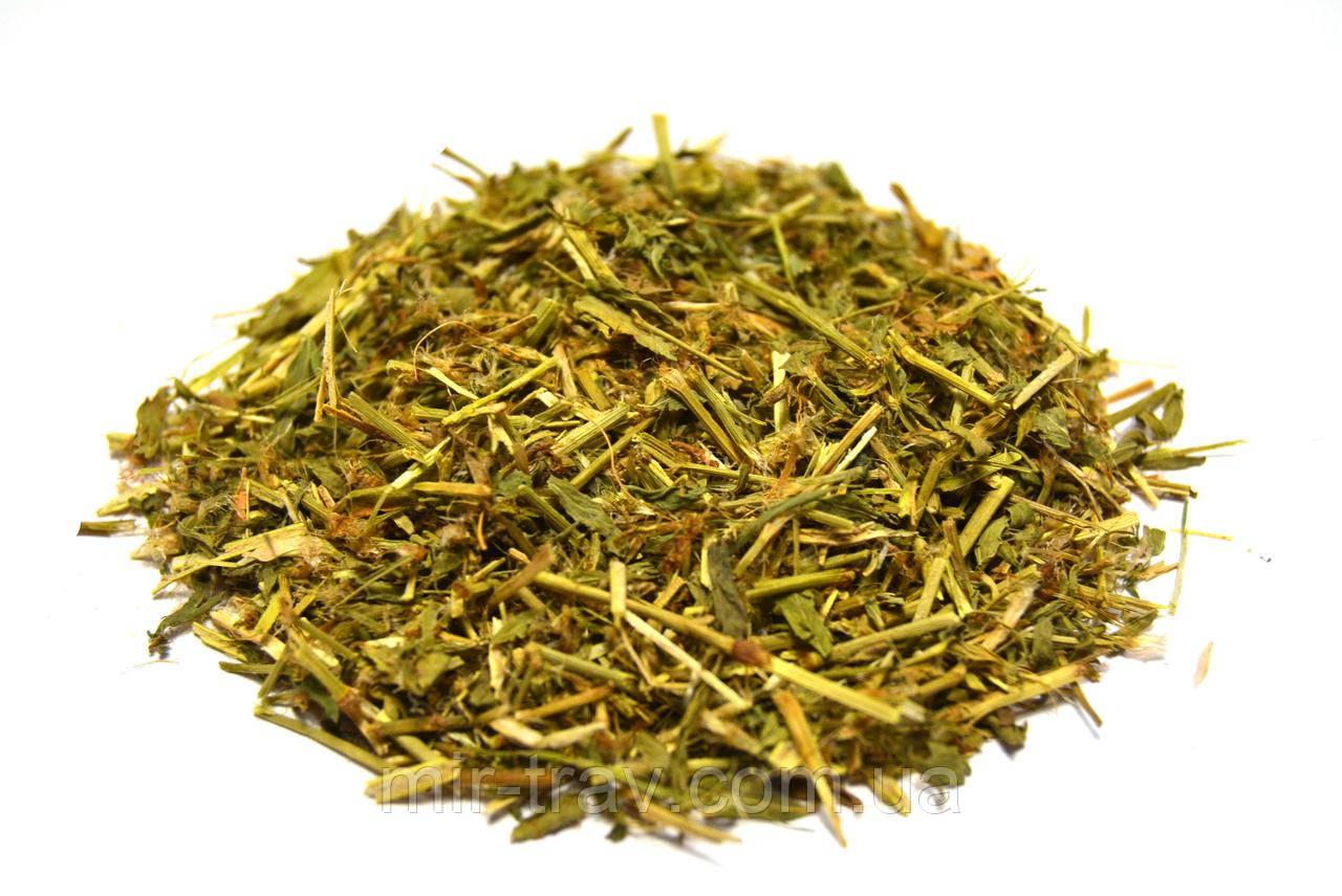 Горец птичий трава (спорыш, гусятник)