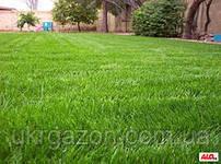 Купить семена газонных трав в Украине от  5 кг