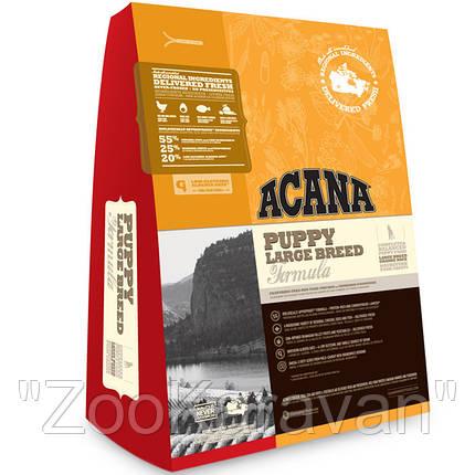 Сухой корм для щенков крупных пород ACANA PUPPY LARGE BREED 17 кг, фото 2