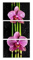 Модульная картина орхидея на бамбуке