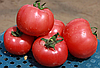Томат Грифон F1 розовый Nunhems 500 семян