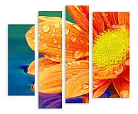 Модульная картина макро капли на цветке