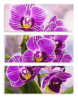 Модульная картина фиолетовые орхидеи 3д
