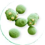Уничтожение вирусов и бактерий