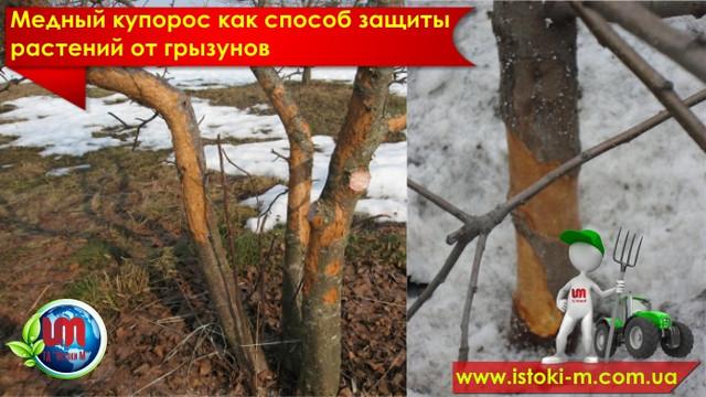 защита деревьев и кустарников от грызунов_защита плодовых деревьев от мышей и зайцев