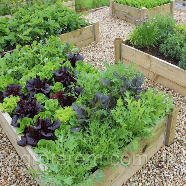 А Вы знали о полезной совместимости растений на грядках!?