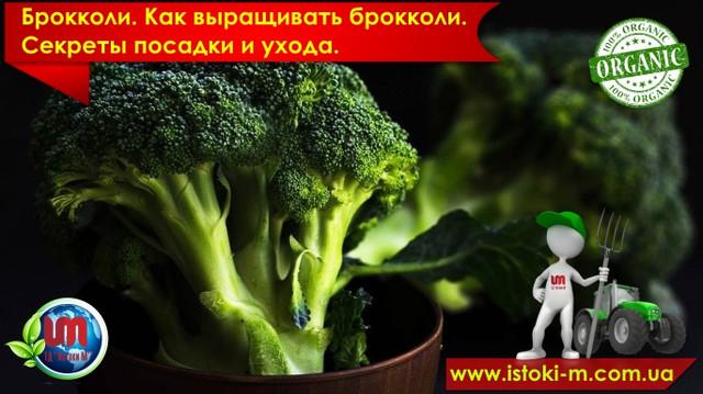 брокколи_посадка брокколи_как вырастить рассаду брокколи_уход за брокколи_подкормка брокколи_удобрения органические для брокколи