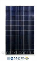 Солнечная батарея 245 Ватт 24 Вольта панель BYD поликристалл