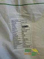 Семена подсолнечника НК Брио Syngenta, фото 3