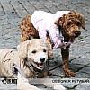 """Куртка """"Волна"""" для собак Is Pet. Одежда для собак, фото 8"""
