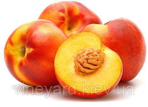 Нектарин, саженцы персика на подвое миндаль горький