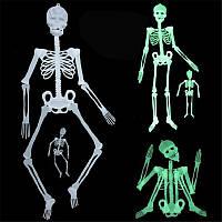 Скелет фосфорний підвісний 30 см світиться в темряві - декорація на хеллоуїн, фото 1