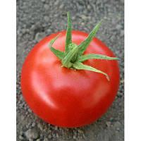 Семена томата индетерминантного Хиларио F1 Seminis от 250 шт