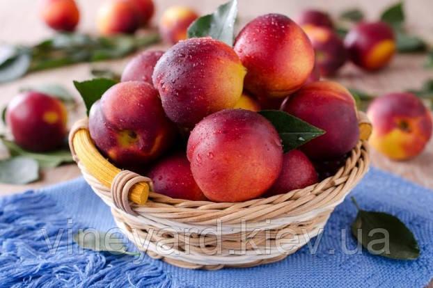 Саженцы персика, нектарин, собственное производство, подвой миндаль