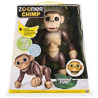 Интерактивная обезьяна Шимпанзе Zoomer Chimp Interactive Chimp Spin Master, фото 1