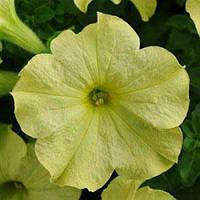 Семена Петуния крупноцветковая Софистика Лайм Грин F1,  100 семян Pan American