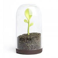 Емкость для хранения чая, кофе, сахара или специй Sprout Jar Qualy