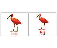 "Карточки мини украинско-английские ""Птахи/ Birds"" 40 карт., в кул 8*10см, ТМ Вундеркинд(455315)"
