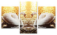 Модульная картина лебеди в озере
