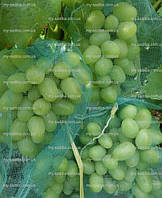 Сетка на виноград (мешки от ос на виноград )