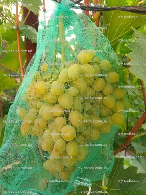 Сетка от ос (мешочки для гроздей)