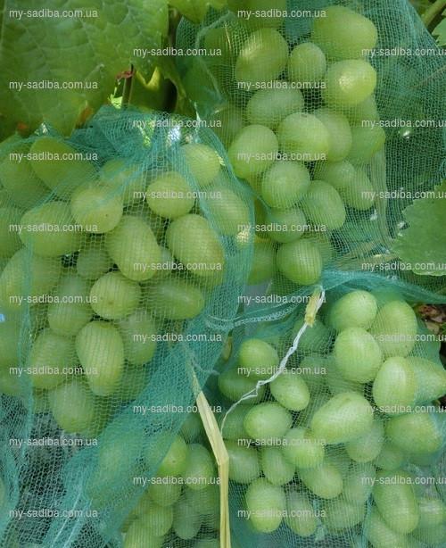 Сетка для защиты кистей винограда от ос, 30*55 см. (10 кг.)