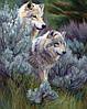 Картина по номерам «Идейка» (КН2435) Пара волков, 40x50 см