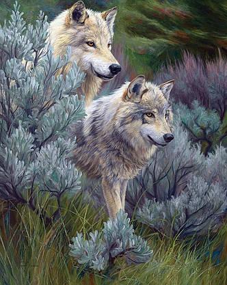 Картина по номерам «Идейка» (КН2435) Пара волков, 40x50 см, фото 2