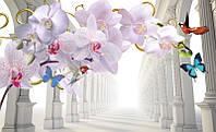 3d орхидея и корридор