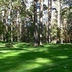 Семена трав для теневого газона. Садово-парковый газон Урожай 2020г.