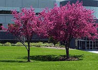 Садово-парковый газон от 5кг