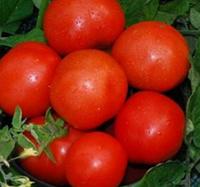 Семена томата детерминантного Фирст F1 Seminis 1 000 шт
