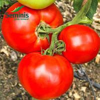 Семена томата детерминантного JAG 8810 F1 Seminis 1 000 шт