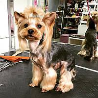 Комплексная стрижка мелкой собаки