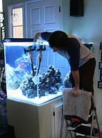 Обслуживание аквариумов (пресных, морских, промишленых)