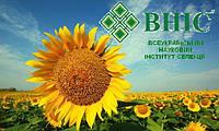 Акция!!! ВНИС Разпродажа семян подсолнечника 2017 года