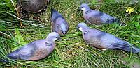 Резиновый муляж голубя - Горлица.