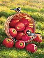 """Картина раскраска по номерам """"Синички и яблоки"""" набор для рисования"""