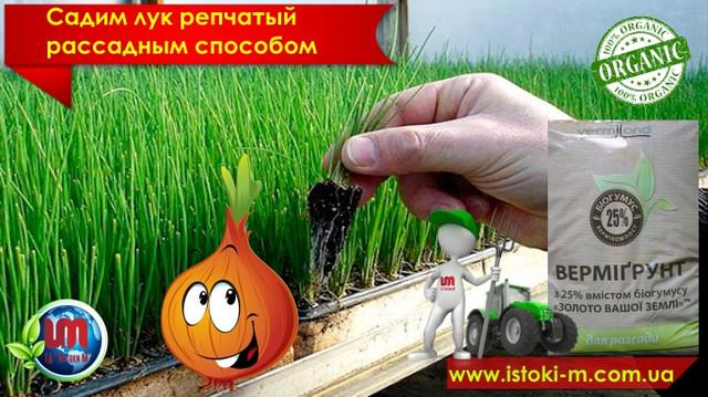 грунт для рассады овощей и зелени_вермигрунт золото вашей земли_почвосмесь для рассады_органическое выращивание репчатого лука_органическое земледелие