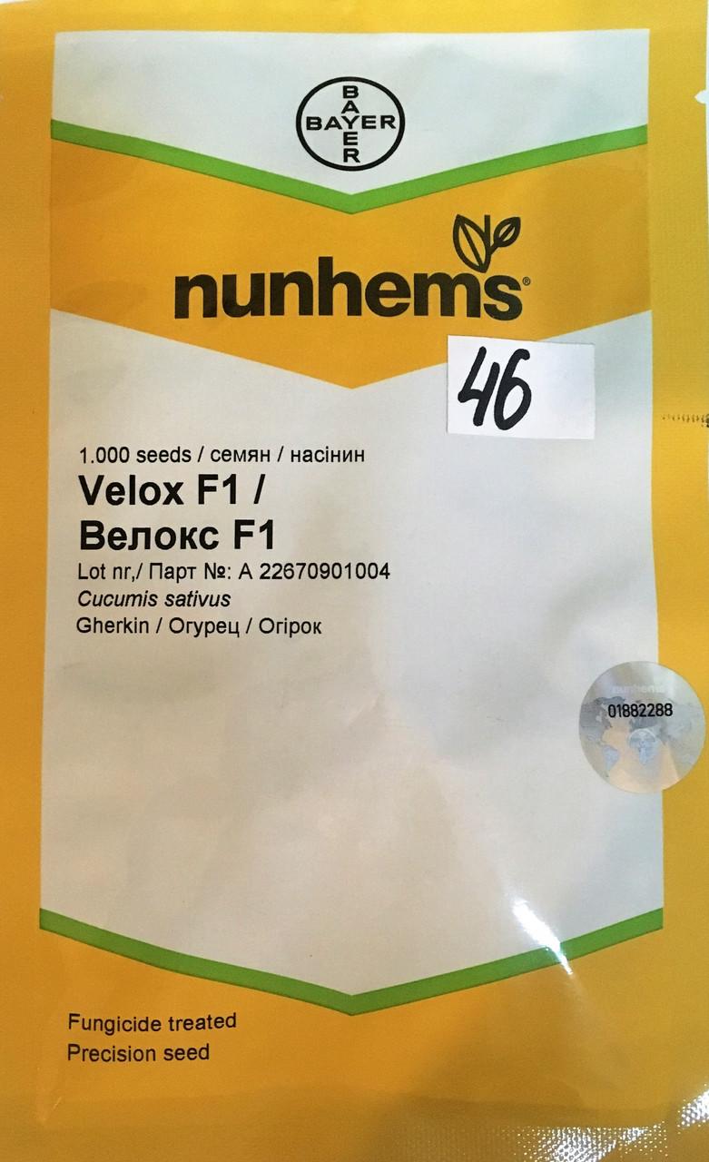 Семена огурца Велокс F1 (Nunhems), 1000 семян — партенокарпический корнишон для засолки и рынка