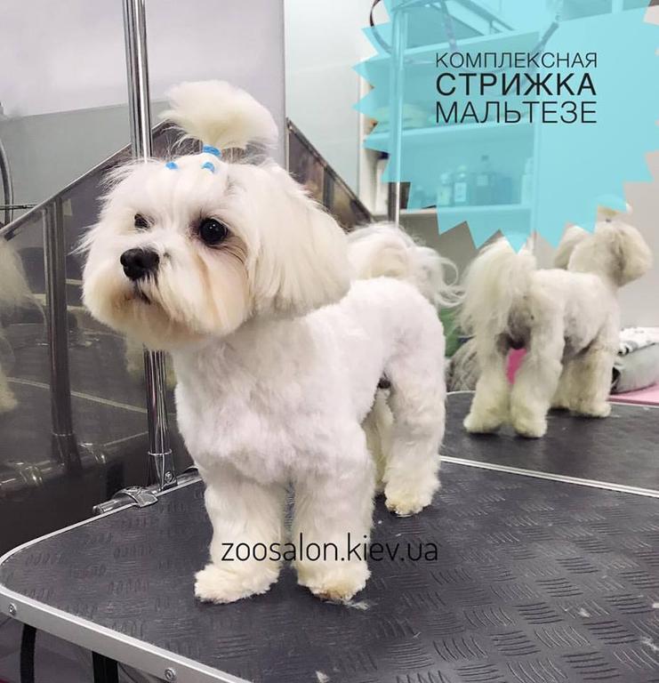 Комплексная стрижка мелких собак