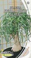 Семена нолины Бутылочное дерево, 4шт, Семена Украины