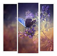 Модульная картина 3д голубая бабочка